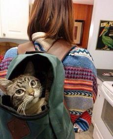 愚蠢的主人不知道我藏在这里