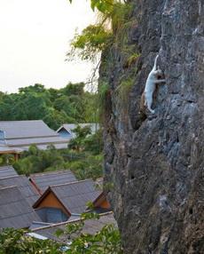 喵星人表示,徒手攀岩什么的soeasy!