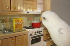 今天主人不在家,只好自己做饭吃了