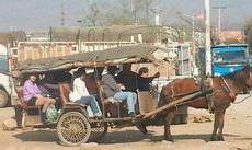 这是我见过最牛的观光车,木有之一!