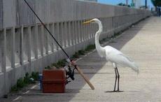 我等的鱼怎么还不上钩呢