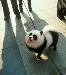 邻居家的大熊猫