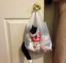 在门口捡到了一只神经病猫