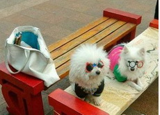 据狗主人说,这俩货在相亲