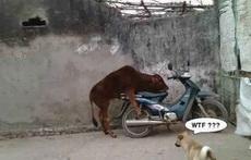 老牛,你这是在干嘛!