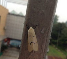 这个蛾子好像不太高兴!