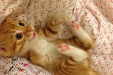 主人,快过来抱抱我嘛!