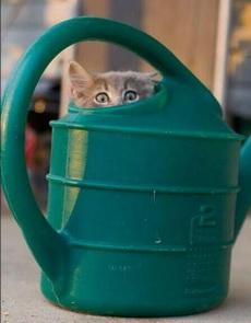 我躲好了,你可以来找了。