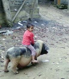 小子你的坐骑好强大。