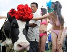 奶牛什么的好可爱呀