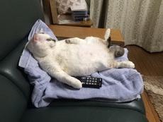 提前下班回家,发现我家猫是这样的