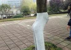 学校里有一颗十分风骚的树,前凸后翘