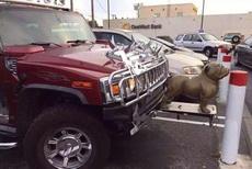 这是狗头车吗?有钱任性