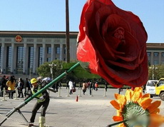 好大一朵玫瑰花,这是求亲吗