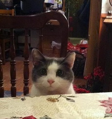 看到这样的喵星人,你忍心不给吃的吗?