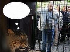 求猎豹此刻的心理活动