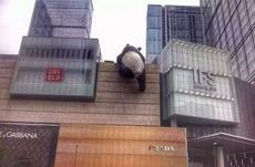 终于知道熊猫在看什么了