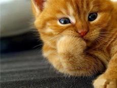 不要打扰我,我在思考猫生