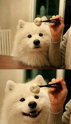 动物图片_来福岛爆笑娱乐网