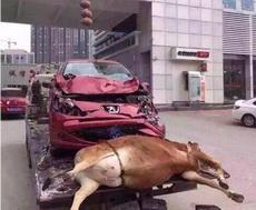 女司机就是牛逼