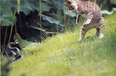 好传神的猫蛇大战哟
