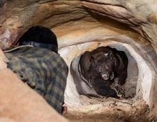小哥找了个山洞借宿,没想到主银回来了