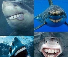 鲨鱼没有尖牙齿就可爱了