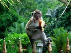 没想到你是这样的猴子