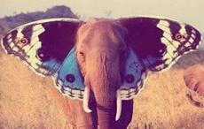 以后让大象怎么在动物界里面混