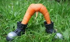 好邪恶的胡萝卜!!!!
