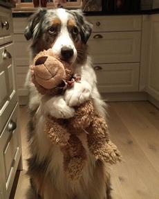汪:我的玩具谁也不许拿走!