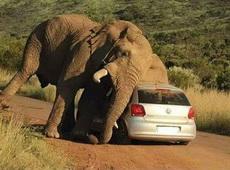 不小心滑了一跤,司机你没事吧?
