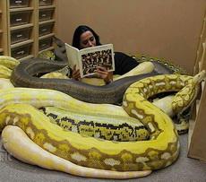 为什么我能够静下心来好好看书!