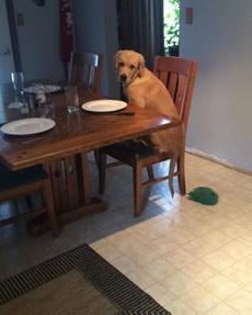 当你妈叫你快点出来吃饭,结果你来了发现根本没做好