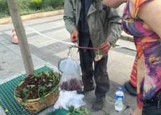 卖杨梅的老人说秤砣被执法人员抢走了,他用了个石头替代