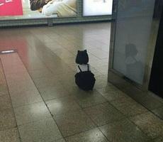寻猫启事的那个终于找到了