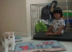 论如何让熊孩子和家猫和平共处?