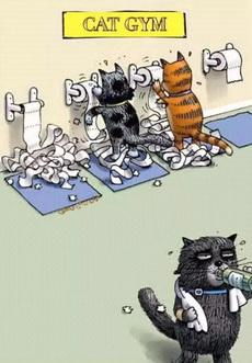 猫咪健身房