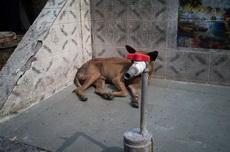真的不敢想象,这只狗遭遇了什么整容经历