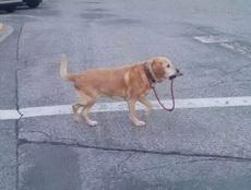 单身狗自己溜自己