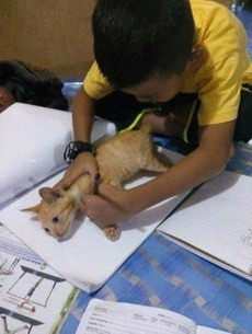 今天作业是画猫