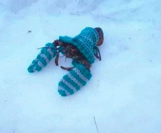 遇到这鬼天气真是没辙了,连龙虾都披上了棉衣外套!