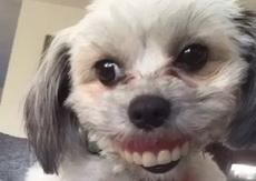 姥姥找了一上午的的假牙