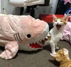 死猫,乱叫什么