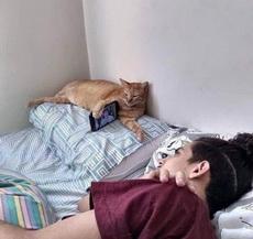 别人家的猫猫