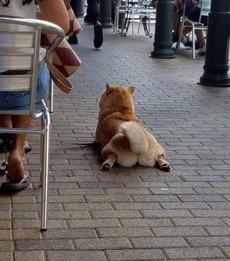 狗子你这姿势真销魂啊