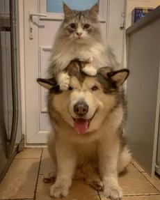 本貓的坐騎是不是傻乎乎的