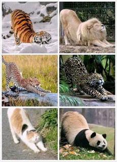 亂入了一只非貓科動物