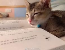 讀書時候的狀態