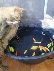 好奇害了猫